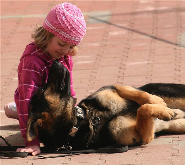 Childern and Protection Dogs, CCPD